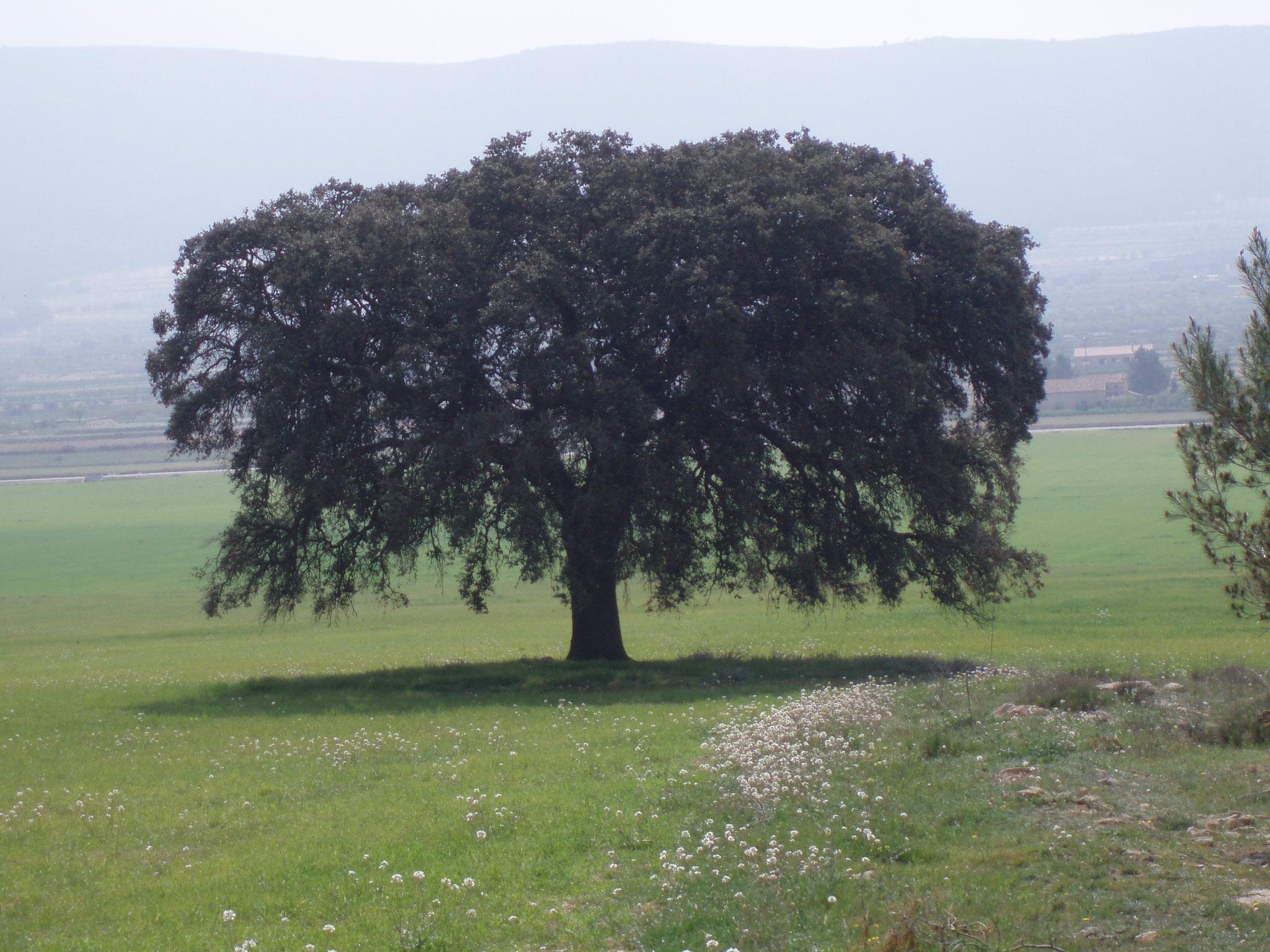 Foto de Medio Ambiente.JPG
