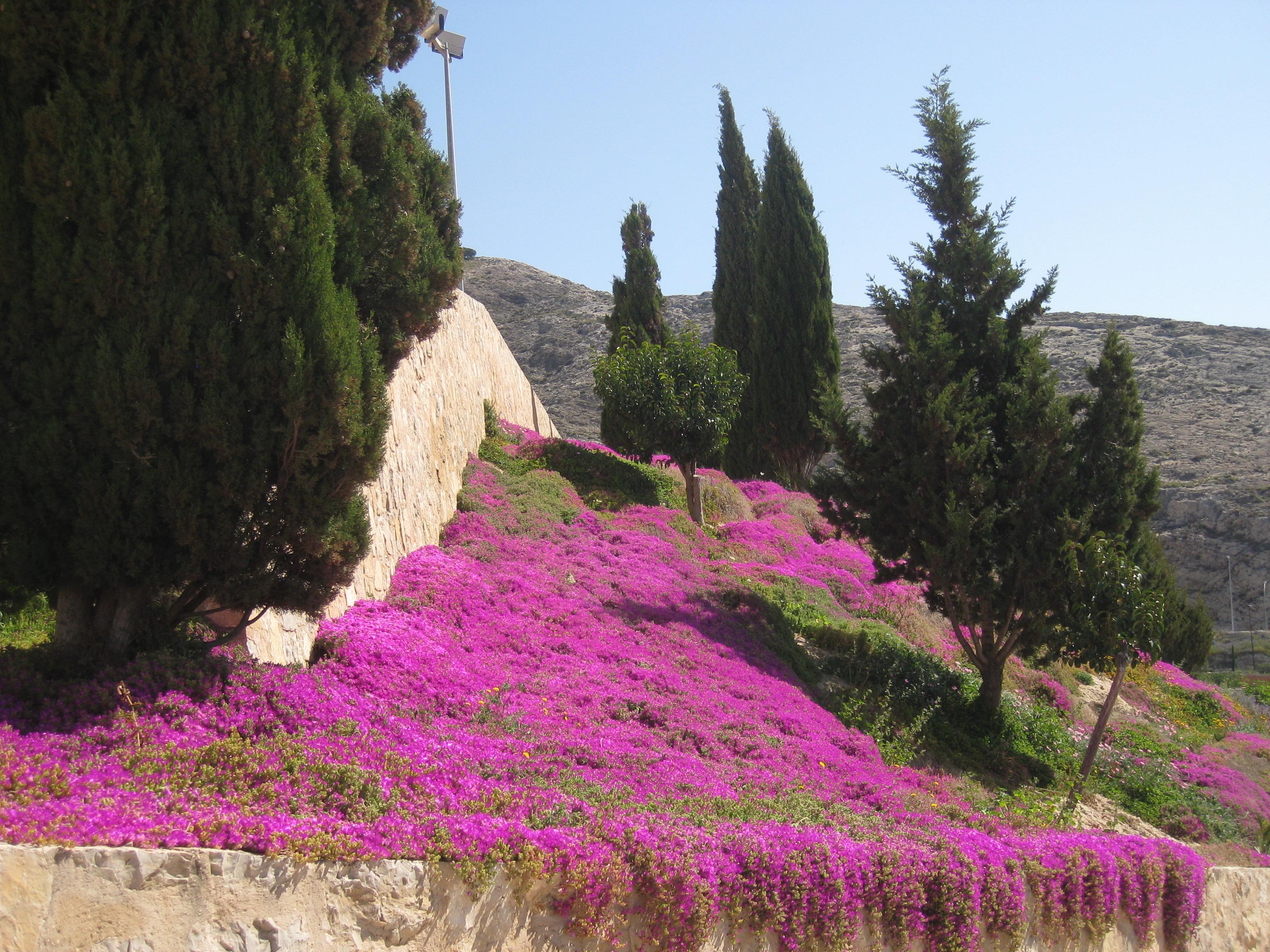 Florecillas ( falda del Castillo Atalaya) 14-4-2013  (Foto ACM) 010.jpg