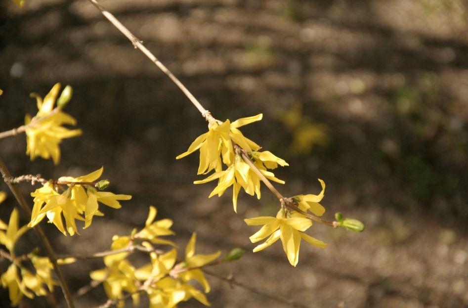 Flores amarillas 1.JPG