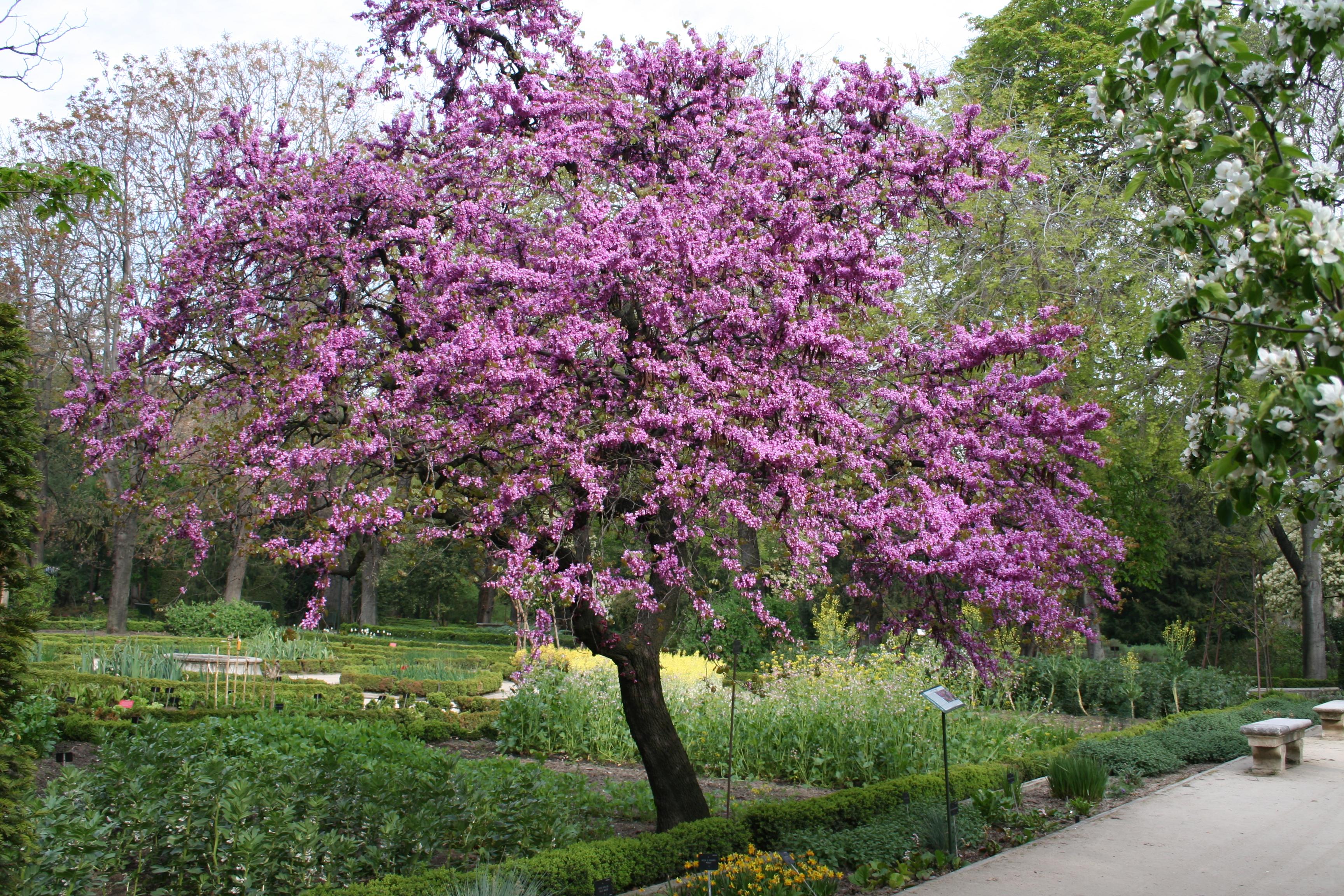 ciudad amor primavera