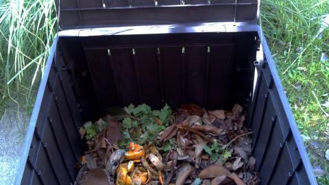 Primeros pasos del compost
