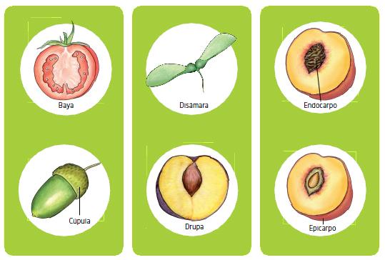 ftuos y semillas 1