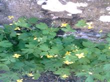 planta mercromina portada