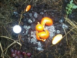 Muestra pre-compost