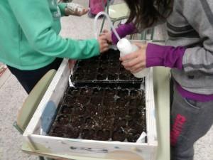 Trasplantando a semillero